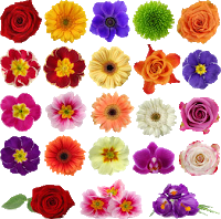NPR Sunday Puzzle (Jul 18, 2021): Searching the Flower Box