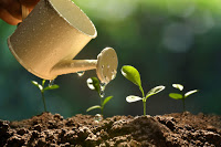 NPR Sunday Puzzle (Jul 4, 2021): Where a Plant Might Grow